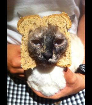 Breading Cats